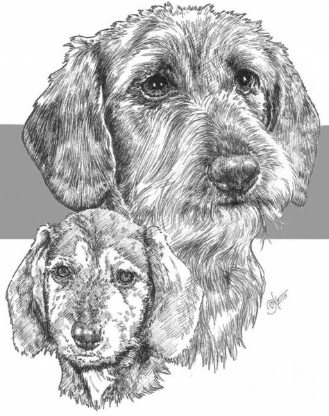 Drawing - Dachshund Wirecoat And Pup by Barbara Keith