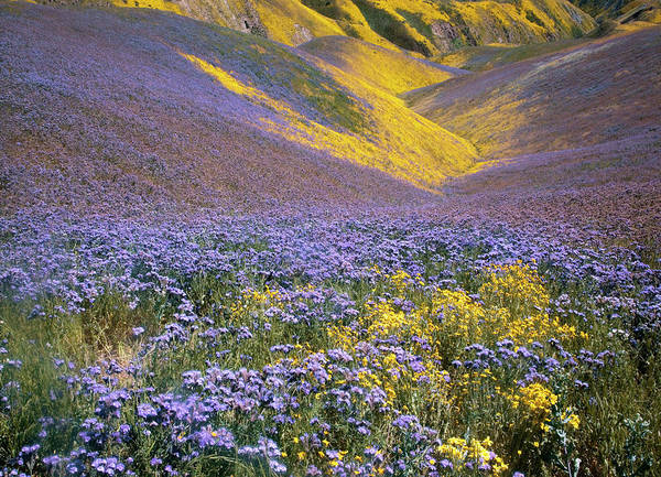 Usa, California, Carrizo Plain National Art Print by Charles Gurche