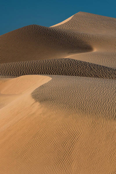 Wall Art - Photograph - Usa, Mojave Trails National Monument by Judith Zimmerman
