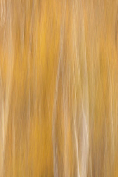 Wall Art - Photograph - Usa, Colorado, San Juan Mountains by Jaynes Gallery