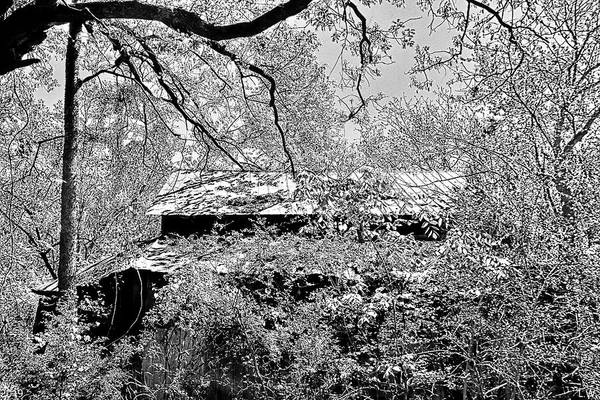 Photograph - A Barn Among The Trees Black And White by Lisa Wooten