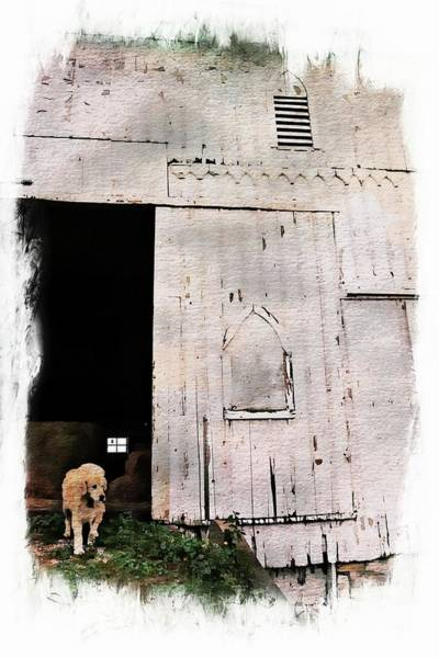 Golden Retriever Digital Art - A Barn For Brady Miller by Toni Abdnour