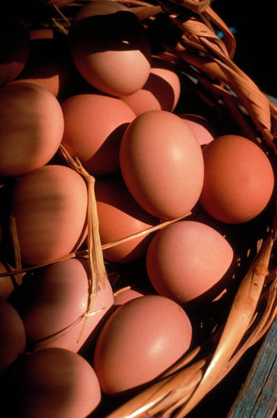 Photograph - A Basket Of Organic Brown Eggs by Lyle Leduc