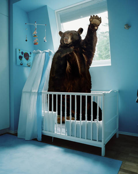 Wall Art - Photograph - A Bear Inside A Crib In A Blue Room by Matthias Clamer