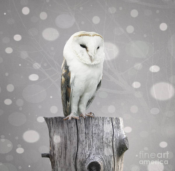 Nocturnal Wall Art - Digital Art - A Beautiful Barn Owl Above A Trunk With by Valentina Photos