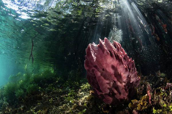 Photograph - A Beautiful Barrel Sponge Grows by Ethan Daniels