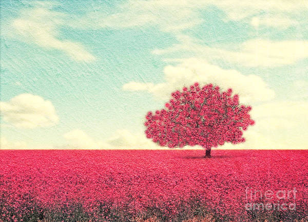 Herbal Wall Art - Photograph - A Beautiful Tree In A Pretty Field by Annette Shaff