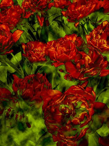 Keukenhof Wall Art - Digital Art - A Bed Of Red Curly Tulips, Keukenhof by Abdul Kadir  Audah