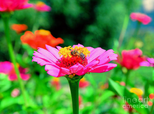 Wall Art - Photograph - A Bee Busy In The Beauty by Jeff Swan