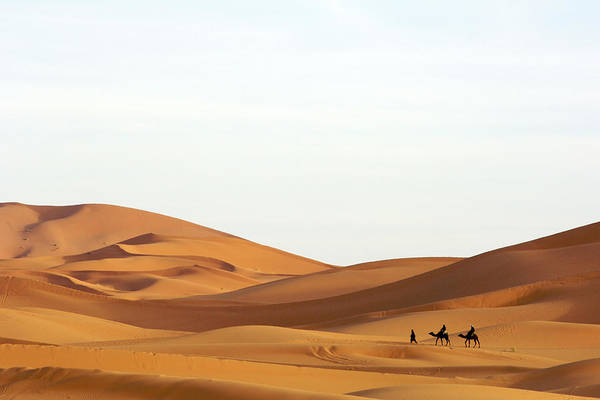 Berber Wall Art - Photograph - A Berber Man Leading Tourists On Camels by Eric Nathan