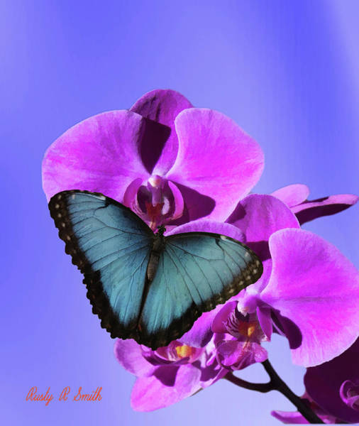 Digital Art - A Blue Morpho Butterfly On Pink Orchid. by Rusty R Smith