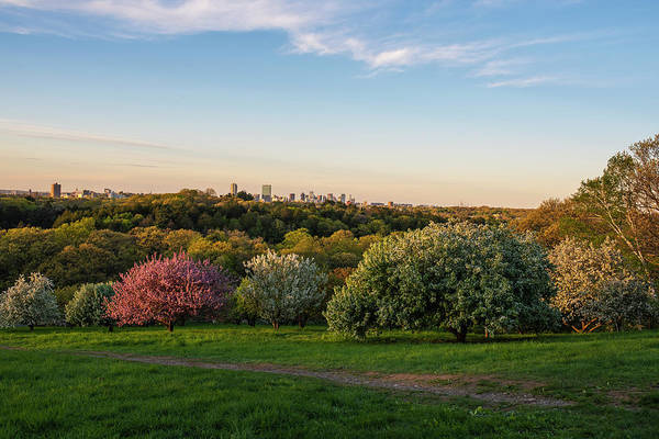 Photograph - A Boston Spring Sunset From The Arnold Arboretum Jamaica Plain Boston Skyline Peters Hill by Toby McGuire