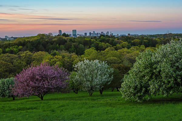 Photograph - A Boston Spring Sunset From The Arnold Arboretum Jamaica Plain Boston Skyline by Toby McGuire