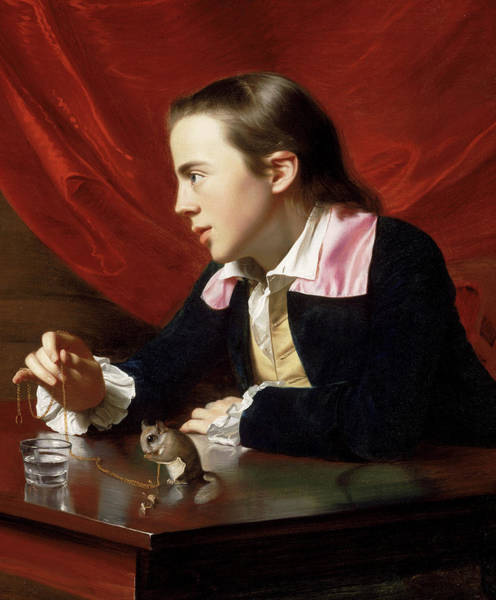 Wall Art - Painting - A Boy With A Flying Squirrel, 1765 by John Singleton Copley