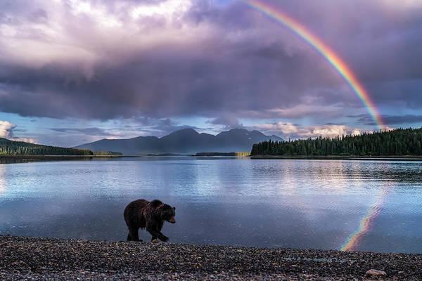 Wall Art - Photograph - A Brown Bear  Ursus Arctos  Walks by John Hyde