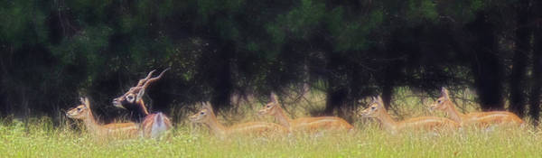 Photograph - A Buck And A Show by Amanda Smith