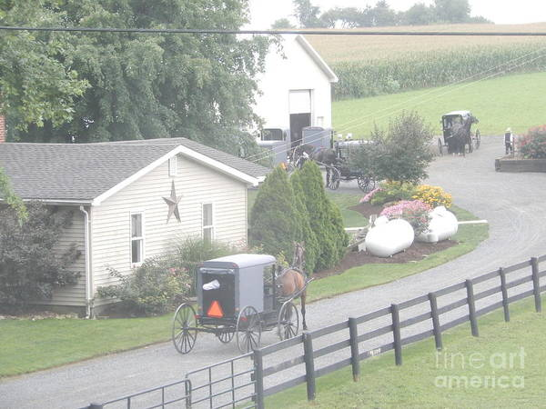 Photograph - A Bunch Of Amish Buggies by Christine Clark