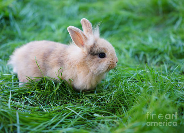 Symbol Photograph - A Bunny Sitting On Green Grass by Zurijeta