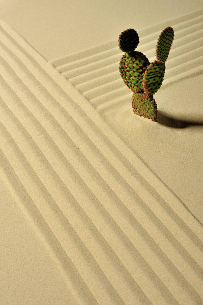 Photograph - A Cactus And Wave Pattern In The Sand by Yagi Studio