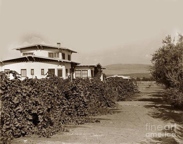 Photograph - A California Residence Showing Orange Groves In Hill At Eleter by California Views Archives Mr Pat Hathaway Archives