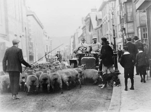 Lewes Photograph - A Car Surrounded By Sheep, Lewes High by Heritage Images