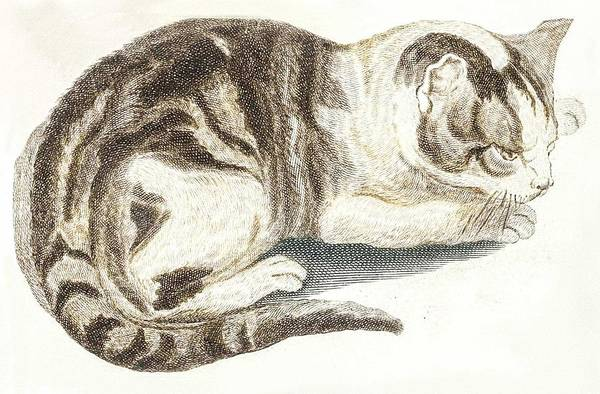 Wall Art - Painting - A Cat By Johan Teyler  1648-1709  by Celestial Images