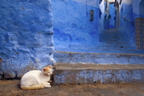 Photograph - A Cat In Chefchaouen by Nicole Young