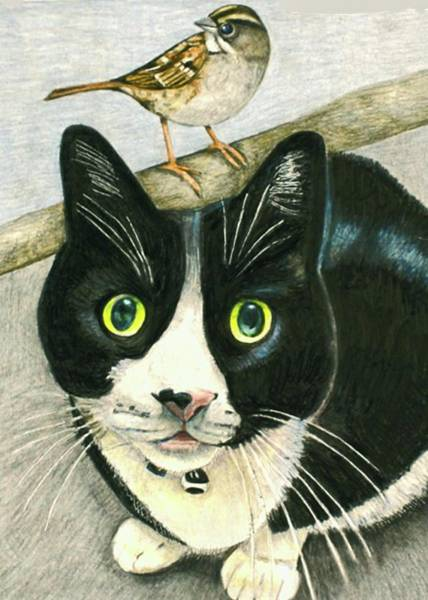 Drawing - A Cat Named Sparrow by Tim Ernst