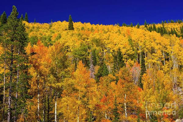 Photograph - A Change Of Seasons by Jon Burch Photography