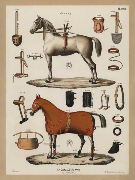 Wall Art - Painting - A Chromolithograph Of Horses With Antique Horseback Riding Equipments   1890  by Celestial Images