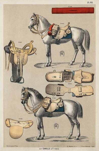 Wall Art - Painting - A Chromolithograph Of Horses With Antique Horseback Riding Equipments From An Antique Horseback Ridi by Celestial Images