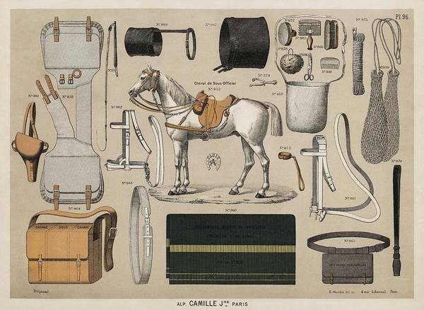 Wall Art - Painting - A Chromolithograph Of Horses With Antique Horseback Ridingeq Uipments   1890  From An Antique Horseb by Celestial Images