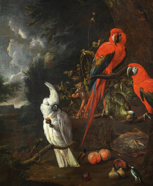 Wall Art - Painting - A Citron-crested Cockatoo, Two Red Macaws, A Green Parrot And A Marmoset, With Apples And Figs by Willem van Royen