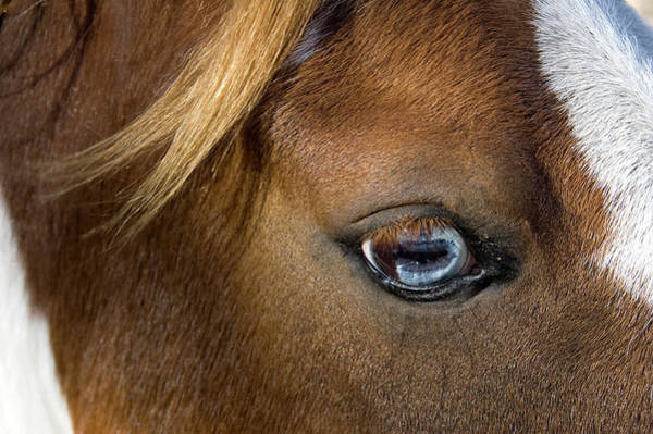 Photograph - A Close-up Of A Horses Brown Eye by Tap10