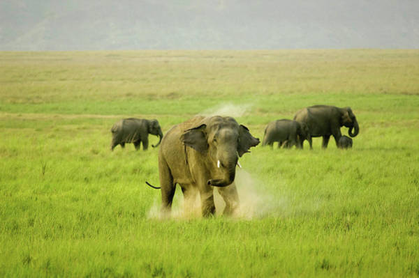 In The Grass Photograph - A Cloud Of Dust by The Wild Side By Nachiketa Bajaj