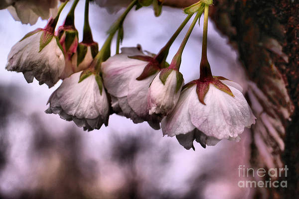 Wall Art - Photograph - A Cluster Of Blossoms by Jeff Swan