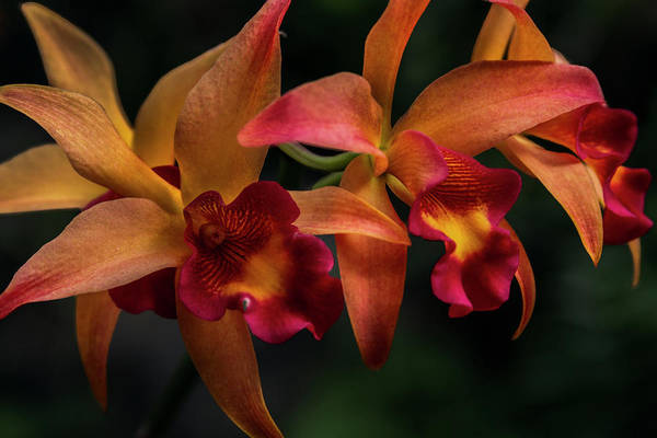 Photograph - A Cluster Of Color by Debra and Dave Vanderlaan