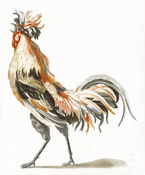 Wall Art - Painting - A Cock By Johan Teyler  1648-1709   3 by Celestial Images
