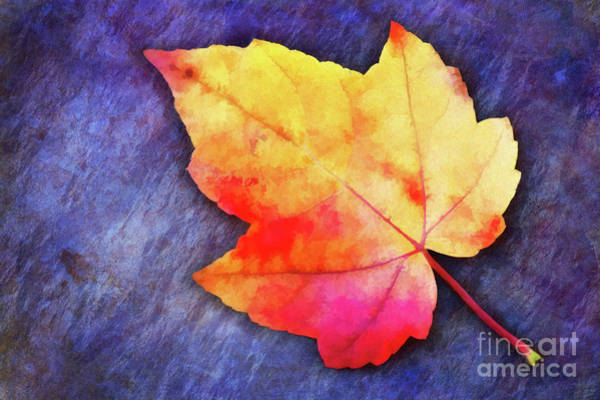Photograph - A Colorful Fall Memory by Anita Pollak