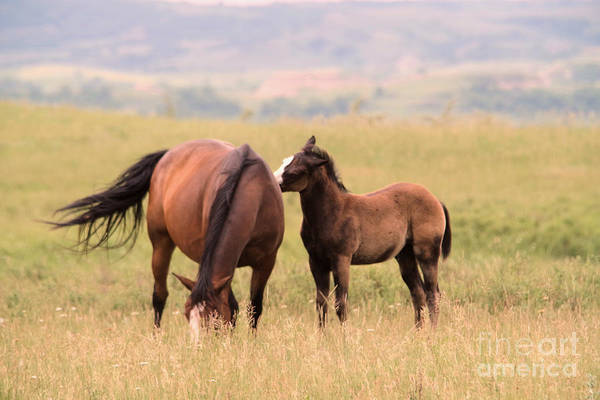 Wall Art - Photograph - A Colt And Its Mother by Jeff Swan
