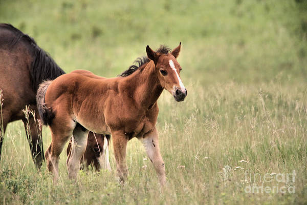 Mare And Foal Photograph - A Colt On The Grasslands by Jeff Swan