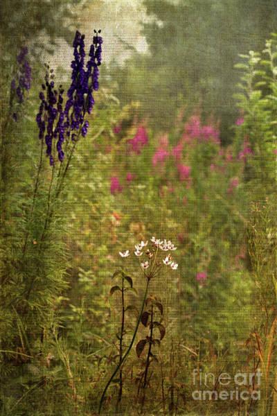 Digital Art - A Cottage Garden by Liz Alderdice