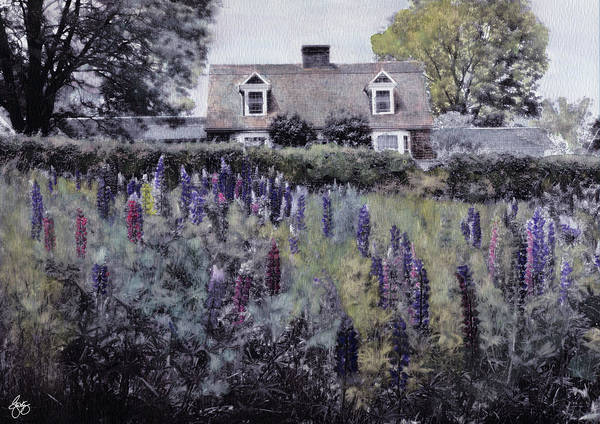 Photograph - A Cottage In The Lupine by Wayne King