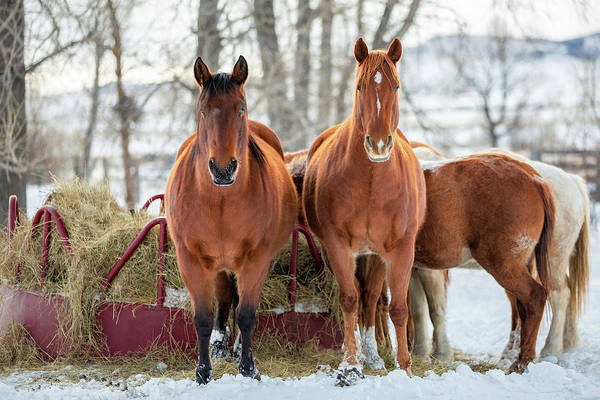 Photograph - A Couple Of Horses by Todd Klassy