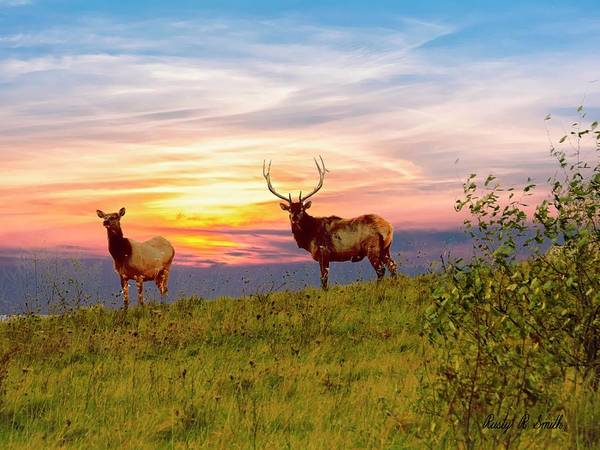 Digital Art - A Cow And Bull Elk Standing On Top Of A Ridge. by Rusty R Smith