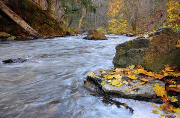 Wall Art - Photograph - A Creek Rushes Past Rocky Banks And by Orchidpoet