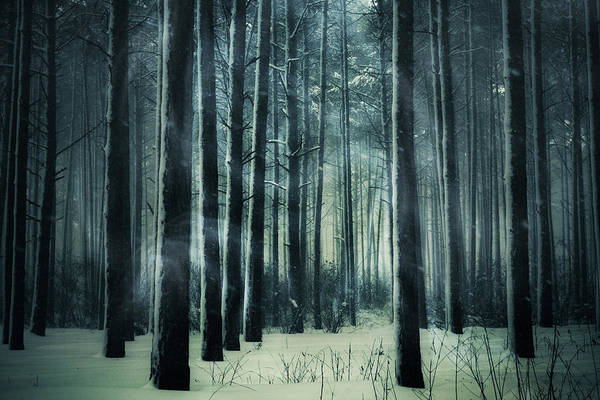 Photograph - A Dark Winter Night by Anne Leven