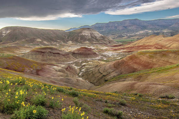 Photograph - A Dash Of Yellow In The Painted Hills  by Matthew Irvin