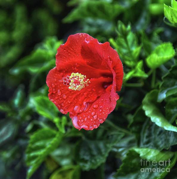 Wall Art - Photograph - A Delicate Touch by Arnie Goldstein
