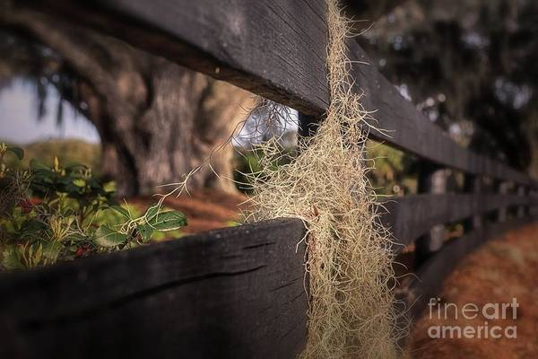 Photograph - A Different Perspective by Mary Lou Chmura